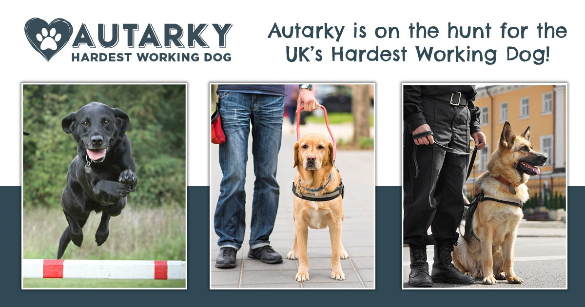 A triple award-winning campaign: Finding the UK's hardest Working Dog with Autarky
