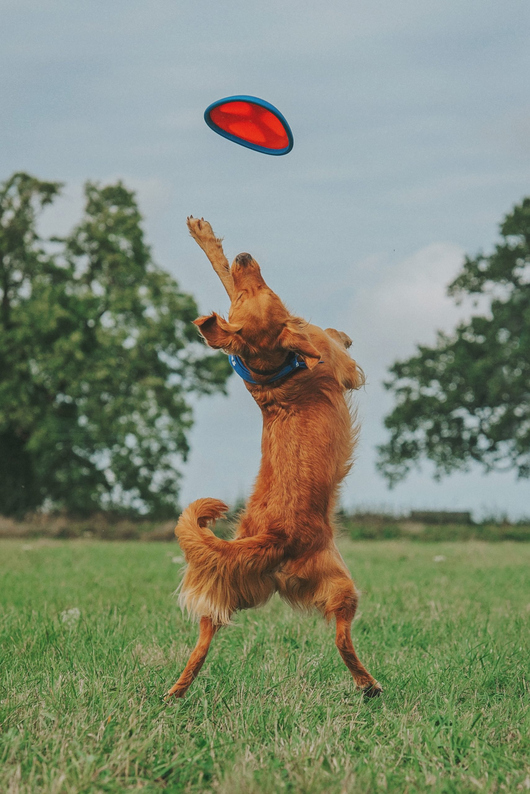 Celebrating National Pet Month with our top 5 pet campaigns